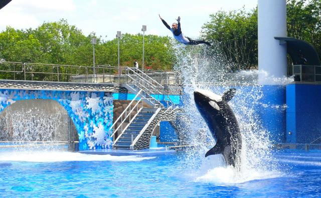 Quels parcs d'attractions visiter durant votre voyage à Orlando?