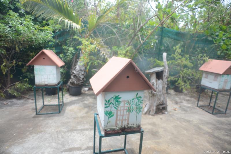Le jardin d 39 eden de saint gilles les bains les bons for Entretien jardin ile de la reunion