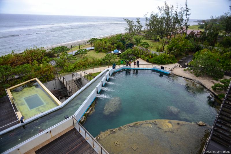 Kélonia, l'observatoire des tortues marines de la Réunion