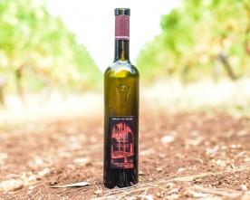 Ile de Saint Honorat avec son Abbaye et son vin