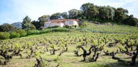 Oenologie et Patrimoine Immatériel de la Corse