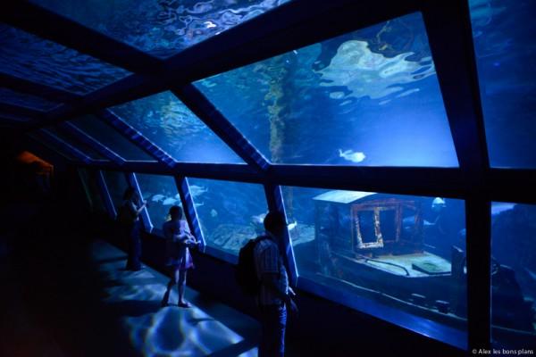 aquarium-saint-gilles-les-bains-reunion-13
