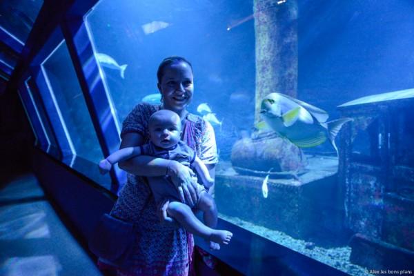 aquarium-saint-gilles-les-bains-reunion-14