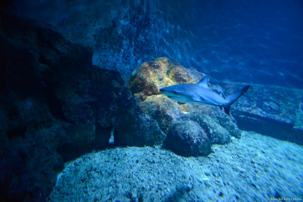 aquarium-saint-gilles-les-bains-reunion-15