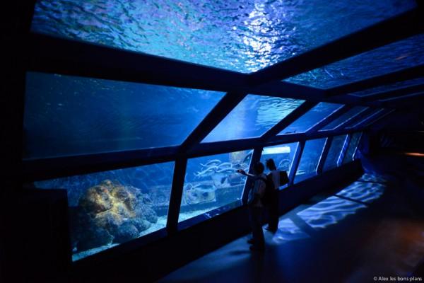 aquarium-saint-gilles-les-bains-reunion-16