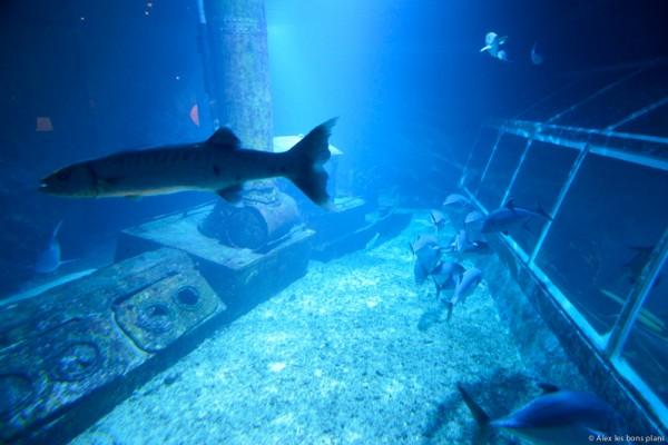 aquarium-saint-gilles-les-bains-reunion-17