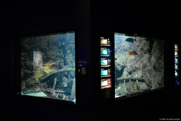 aquarium-saint-gilles-les-bains-reunion-2