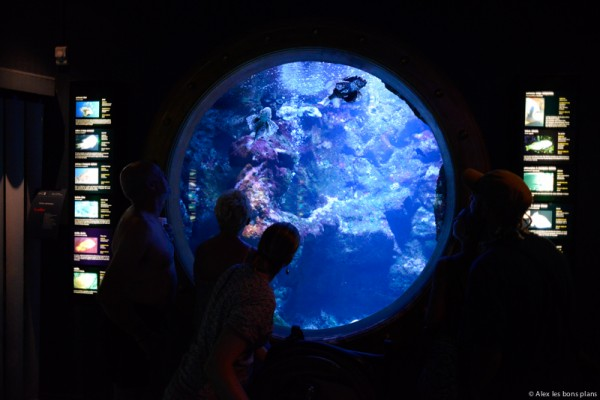 aquarium-saint-gilles-les-bains-reunion-3