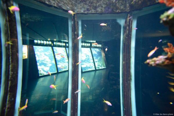 aquarium-saint-gilles-les-bains-reunion-4
