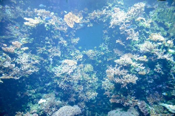 aquarium-saint-gilles-les-bains-reunion-5