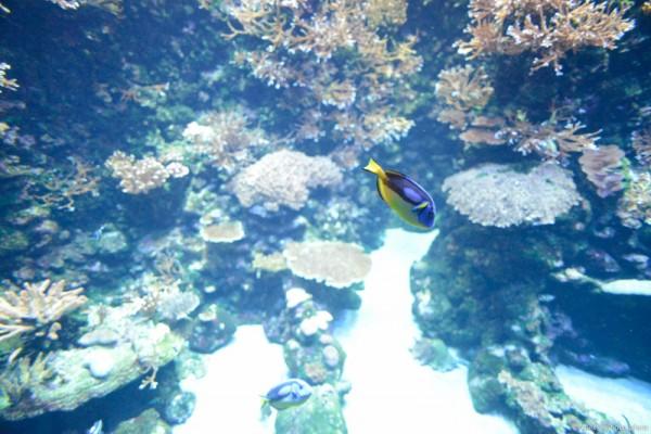 aquarium-saint-gilles-les-bains-reunion-6