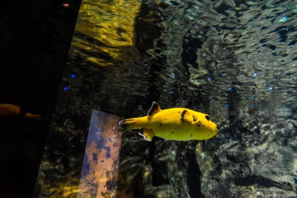 aquarium-saint-gilles-les-bains-reunion