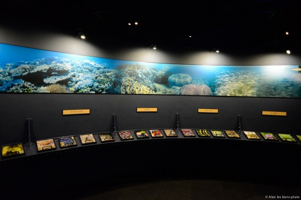 aquarium-saint-gilles-les-bains-reunion-8
