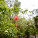 jardin-eden-reunion-30