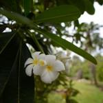 jardin-eden-reunion-31