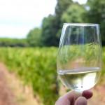 vin-saint-honorat-blogtrip-cannes-gourmet-5