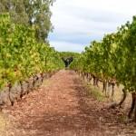 vin-saint-honorat-blogtrip-cannes-gourmet-6